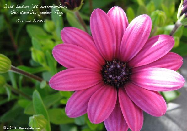 Das Leben ist wunderbar. Sei dankbar jeden Tag. Zitat Giovanna Lotito